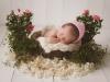 Nyföddporträtt Nyföddfotograf