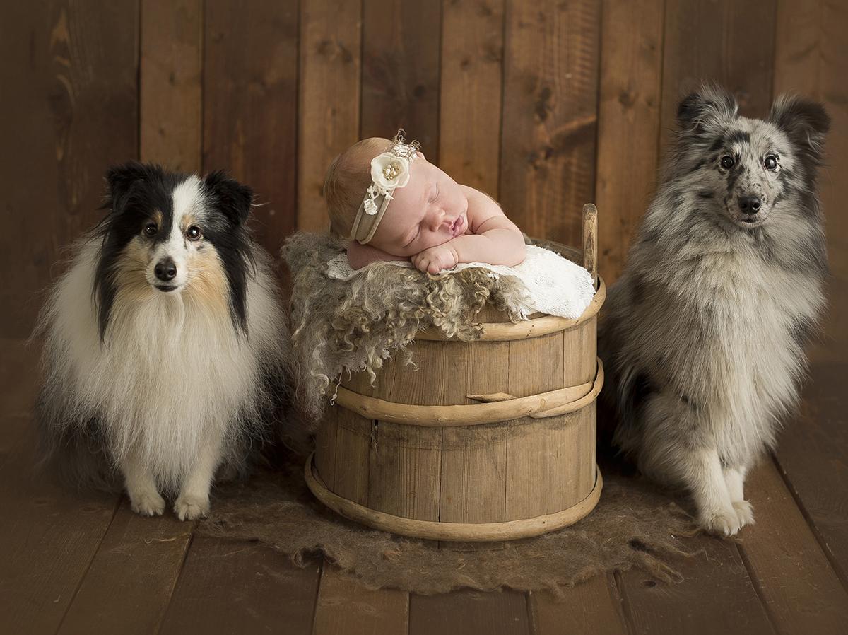 Boka nyföddfotografering med hundar